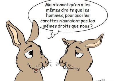 Droits des lapins